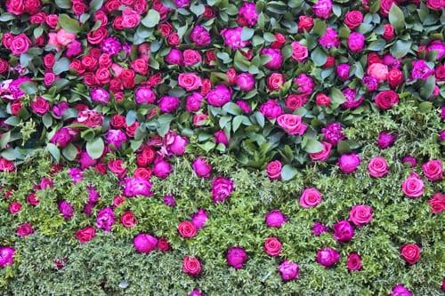 Rebecca-Louise-Law-Floral-Installation-Clifton-Nurseries-Flowerona-6