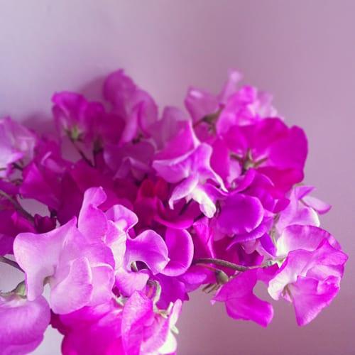 Sweet-Peas-Flowerona