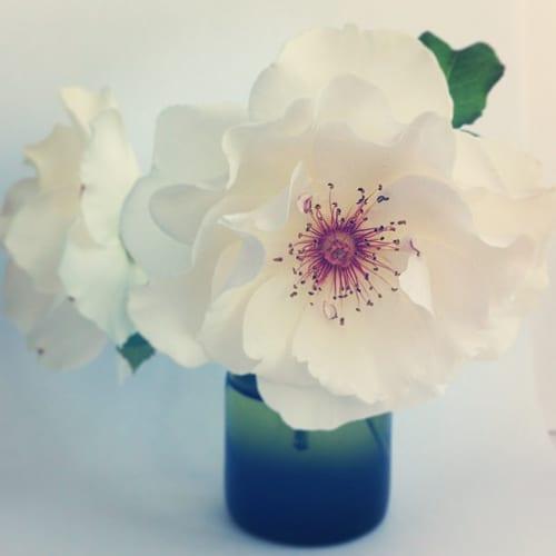 Flowerona-Margaret-Merril-rose