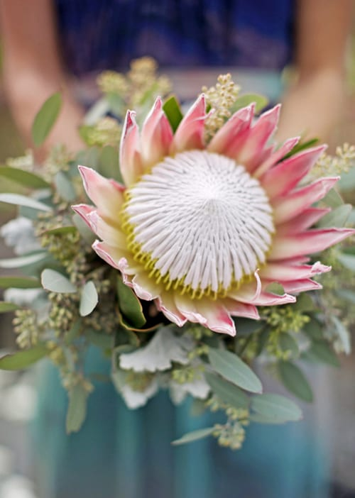 King-Protea-Bridal-Bouquet-Style-Me-Pretty-Our-Labour-of-Love-Belle-Destination-Weddings-Bella-Bloom