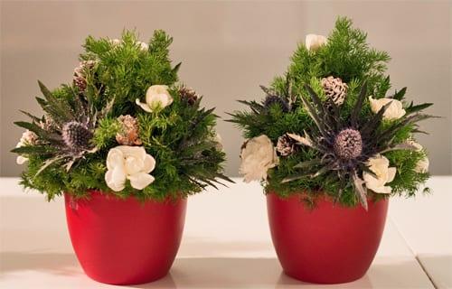 Mini-Christmas-Tree-Marks-&-Spencer Flowerona