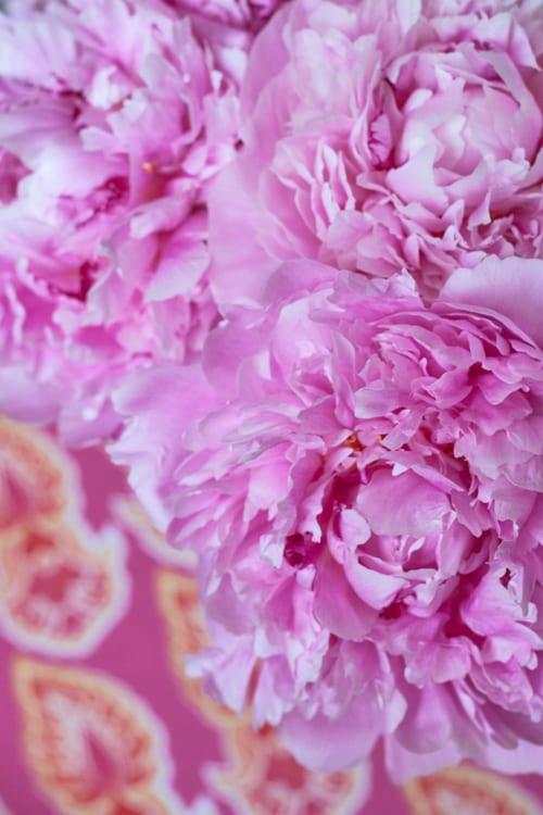 Pale-Pink-Peonies-Flowerona 1