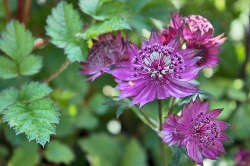 RHS-Hampton-Court-Palace-Flower-Show-2013-A-Cool-Garden-Ruth-Marshall-Flowerona