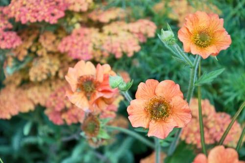 RHS-Hampton-Court-Palace-Flower-Show-2013-Mid-Century-Modern-Adele-Ford-Susan-Willmott-Flowerona