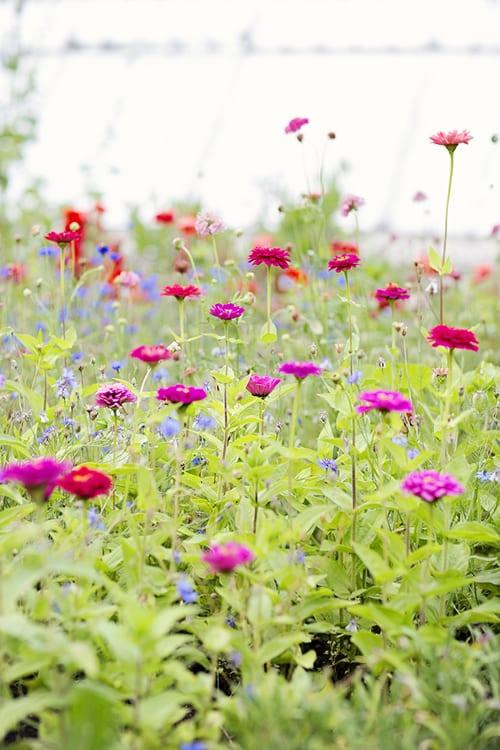 Christina-Greve-August-Garden
