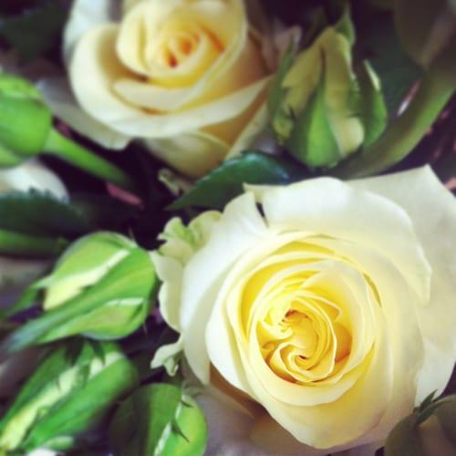 Flowerona-Creme-de-la-Creme-roses