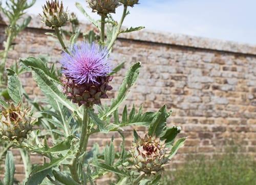 Hampton-Court-Palace-Gardens-Flowerona-12
