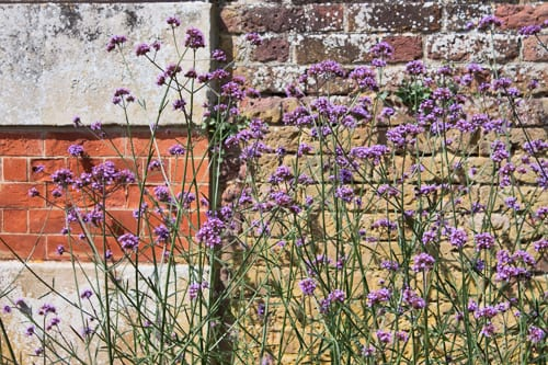 Hampton-Court-Palace-Gardens-Flowerona-17