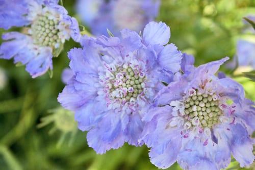 Hampton-Court-Palace-Gardens-Flowerona-21