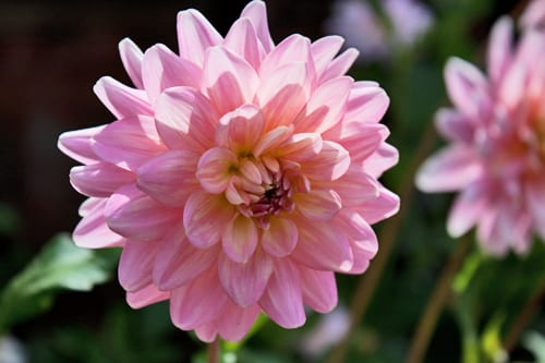 Hampton-Court-Palace-Gardens-Flowerona-24