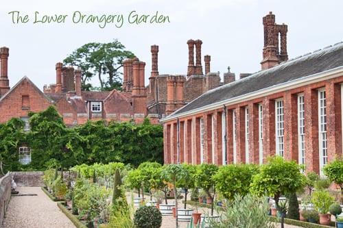 Roses In Garden: A Summer Morning At Hampton Court Palace Gardens