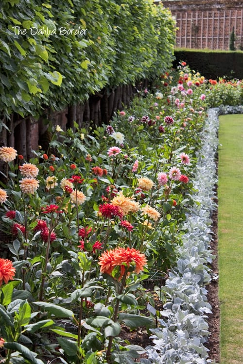 Hampton-Court-Palace-Gardens-Flowerona-8a