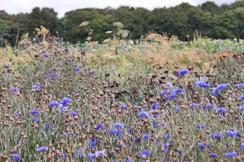 Plantpassion-Flowerona-18