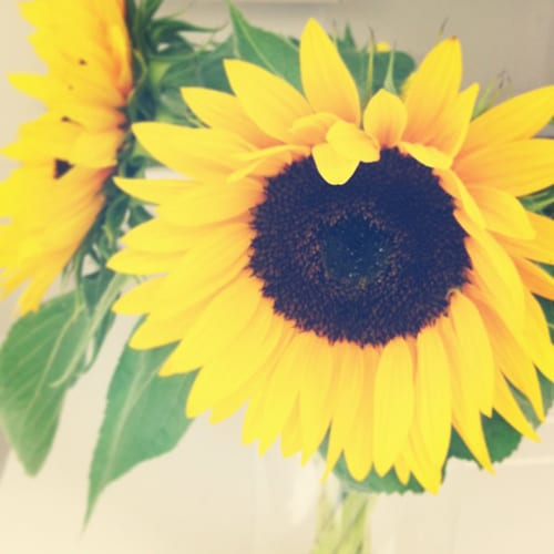Flowerona Reflects: sunflowers & sunshine