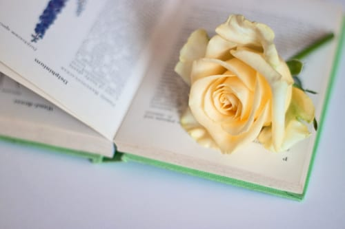 Yellow-rose-and-book-Flowerona