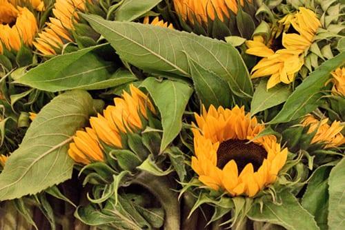 1_New-Covent-Garden-Flower-Market-Flowerona_2
