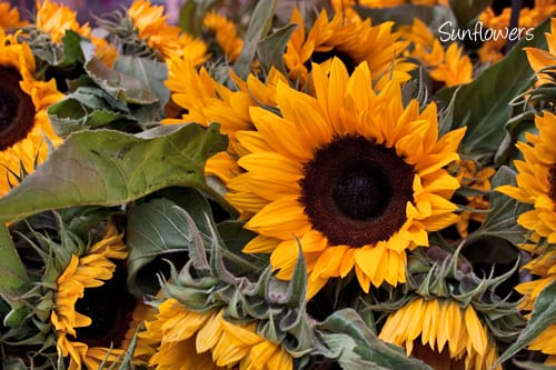 Columbia-Road-Flower-Market-Sep-2013-Flowerona-18a