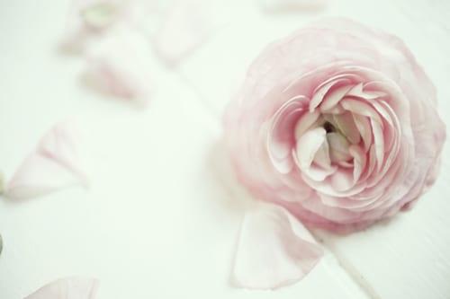Emily-Quinton-Flower Photo