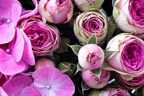 Flowerona-1-Katie-Spicer-Photography