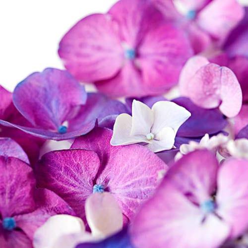 Flowerona-16-Katie-Spicer-Photography