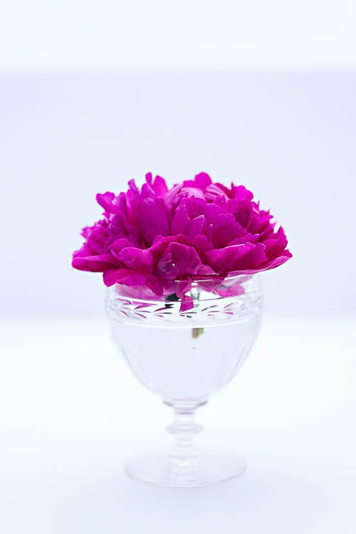 Flowerona-17-Katie-Spicer-Photography