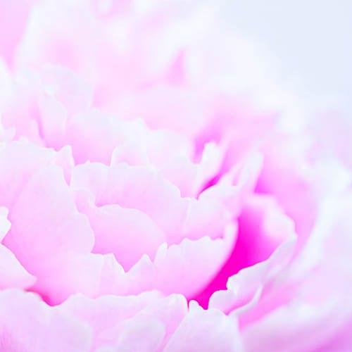 Flowerona-18-Katie-Spicer-Photography
