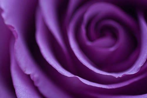 Flowerona-2-Katie-Spicer-Photography