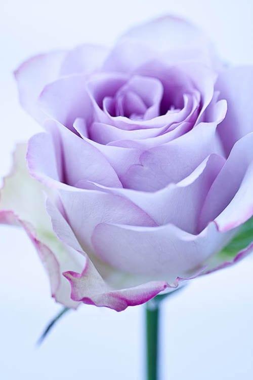 Flowerona-9-Katie-Spicer-Photography