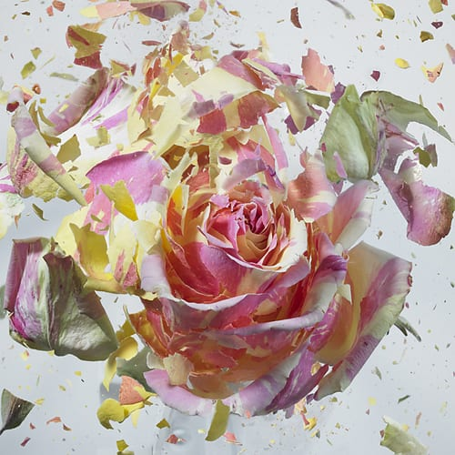 High-Speed-Flower-Explosions-Martin-Klimas