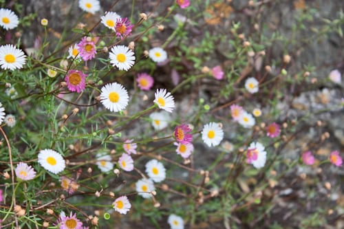 Salcombe-2013-Flowerona-5
