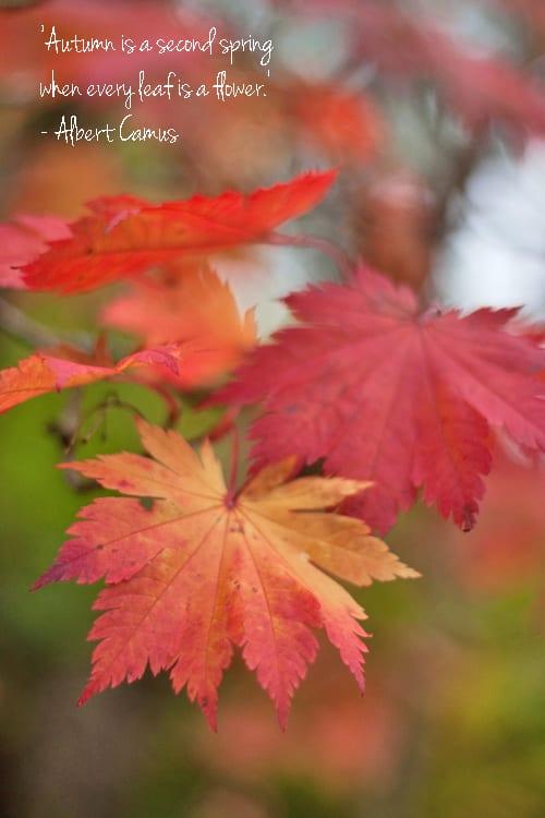 Autumn-Leaves-Flowerona-6