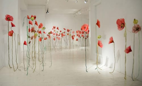 Jannick-Deslauriers-Poppies-1