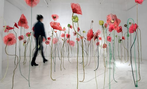 Jannick-Deslauriers-Poppies-2