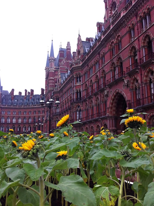 Living with Nature Exhibition at the St Pancras Renaissance Hotel & St Pancras International