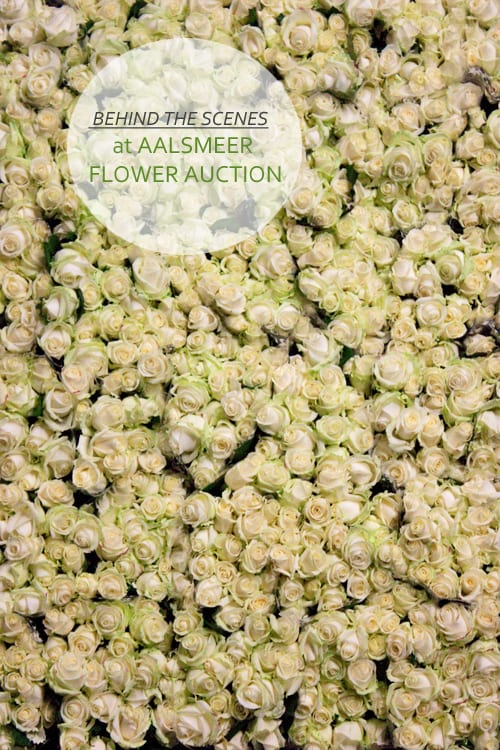Aalsmeer-Flower-Auction-Flowerona