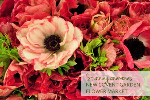 Anemones-New-Covent-Garden-Flower-Market-1