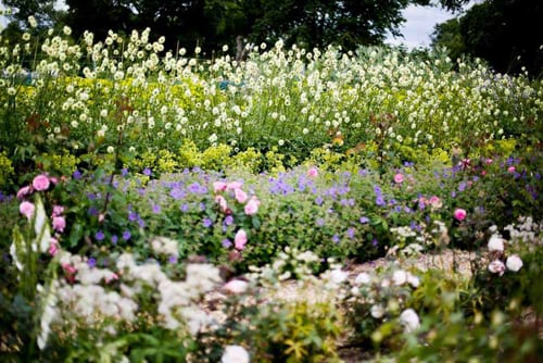 Green-and-Gorgeous-June-cutting-beds
