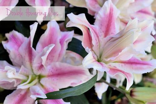 Rose-lilies-IFTF-Flowerona-8
