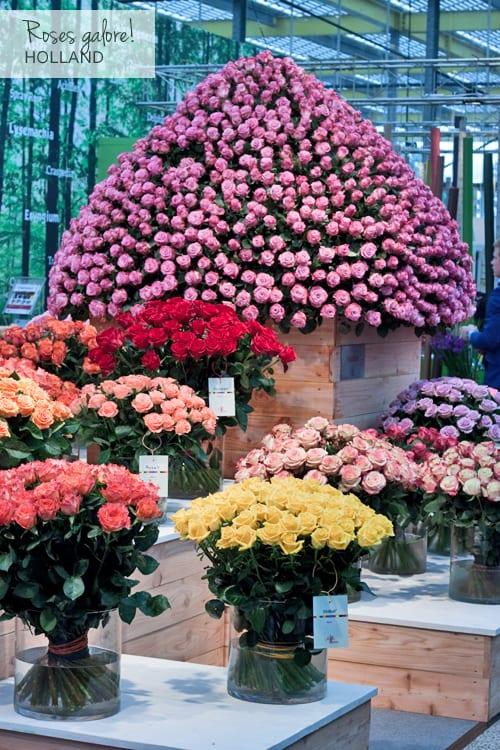 Roses-IFTF-Flowerona-1
