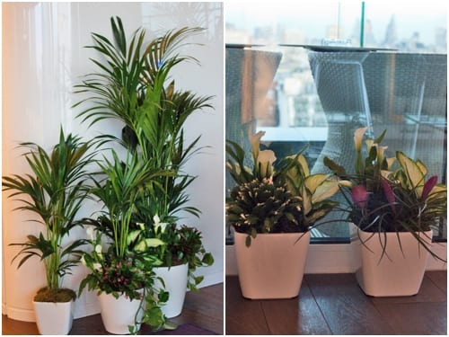 How many plants do you have in your home and do you know the benefits?