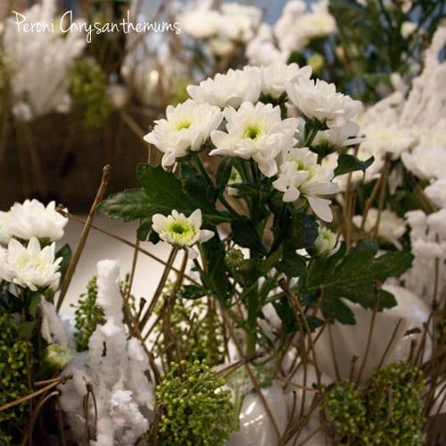 Peroni Chrysanthemum-Deliflor-Flowerona