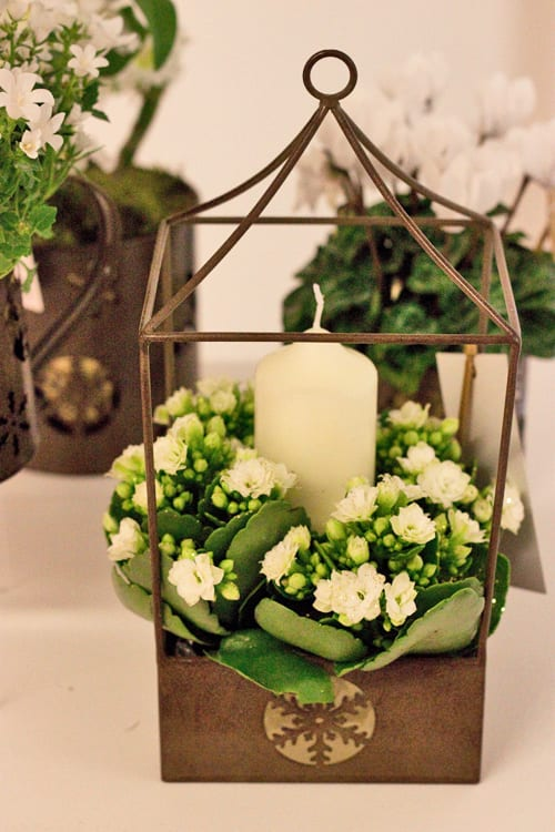 Beautiful white flowers & plants for Christmas 2013 from Marks & Spencer   Flowerona