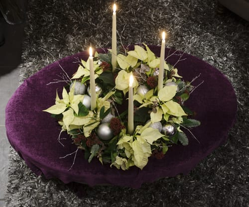 Poinsettia-Neill-Strain-113