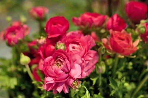 Florist Friday: Inside That Flower Shop in London's East End