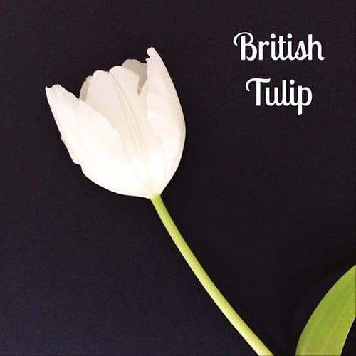 British-White-Tulip-Flowerona