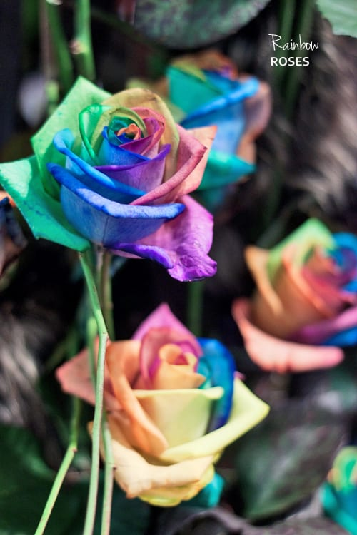 Rainbow Roses, with petals in every colour of the rainbow