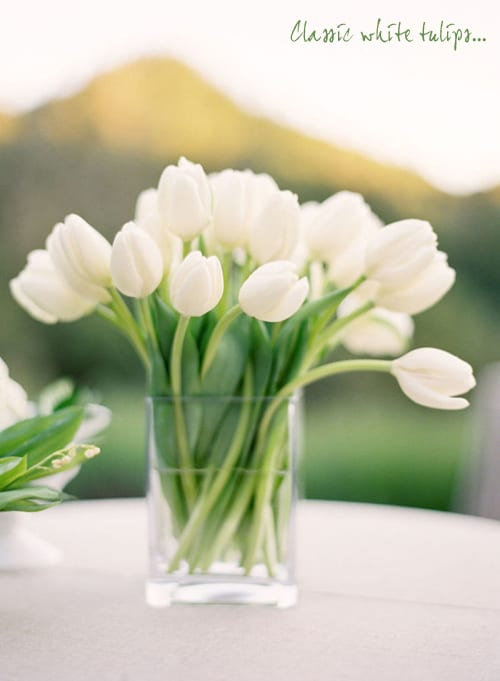 Style-Me-Pretty-Jose-Villa-White-Tulips-in-Vase