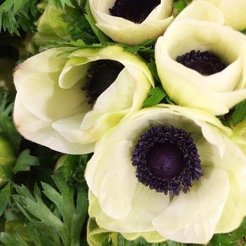 White-Anemones-Flowerona