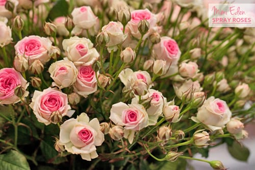 Mimi-Eden-Spray-Roses-Flowerona