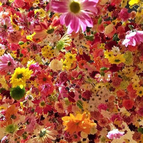 Rebecca-Louise-Law-Flower-Installation-Flowerona